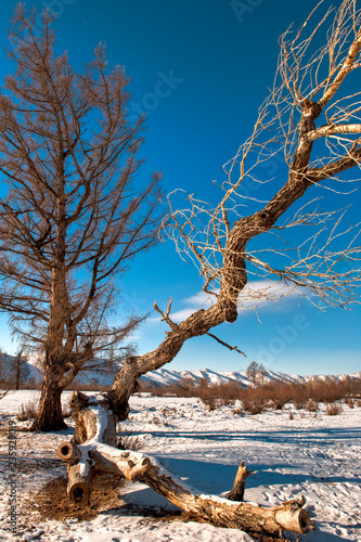 Foto op Canvas Asia land Mongolische Winterlandschaft