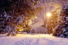Scenic Winter Night Nature Bac...