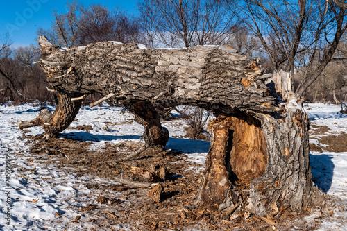 Deurstickers Asia land Abgestorbener Baum