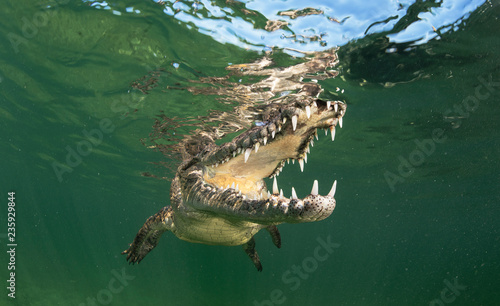 Foto op Canvas Krokodil Cuban Crocodiles