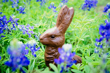 A Chocolate Bunny In A Field