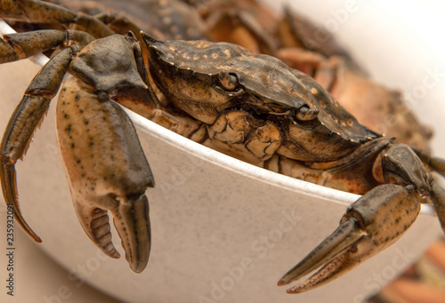 Crabs in white bowl