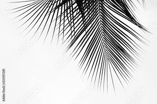 Foto op Plexiglas Historisch geb. Palm leaves isolated on pale white background