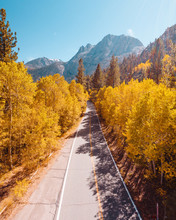 Empty Road With Colorful Trees In Autumn
