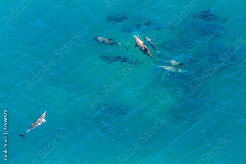 Aerial view of group of whales in St Lucia, South Africa, one of the top Safari Tour destinations. Whale watching during migration. Copy space. Nature sea background.