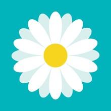 White Daisy Chamomile. Cute Fl...