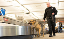 K9 Police Dog Sniffs Airport L...