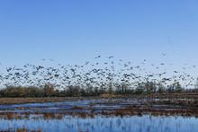 Flocks Of Birds Flying Over Th...