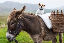 Dog Sitting On A Pony In Ireland