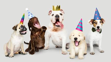 Group of puppies celebratin...