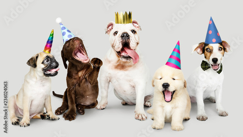 Group of puppies celebrating new year together