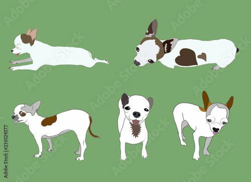 Fotografija  Set of Chihuahua