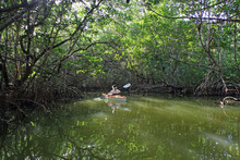 Everglades National Park, Florida 02-22-2014 Woman Kayaks Inside A Mangrove Tunnel In West Lake In Everglades National Park, Florida.