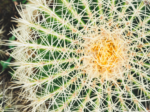 Bright, prickly cactus. Top view, close-up. Tropical background