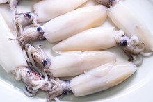 Close Up  Fresh Squid On White...