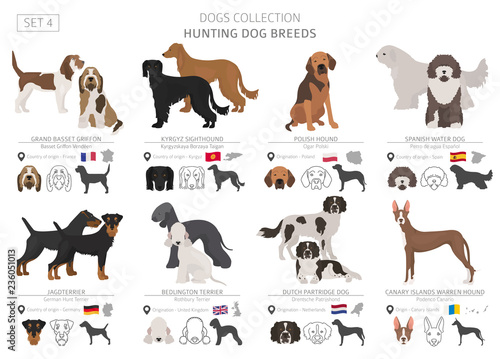 Valokuva Hunting dogs collection isolated on white