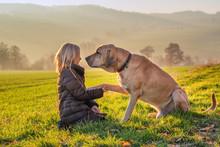 Kind Und Hund Halten Als Beste Freunde Die Pfote In Der Hand Und Genießen Die Warme Abendsonne Im Herbst