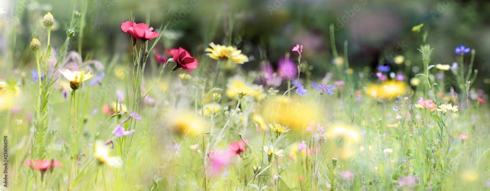 Fototapety, obrazy: wildblumenwiese natur banner pastell