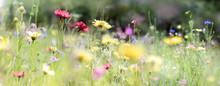 Wildblumenwiese Natur Banner P...