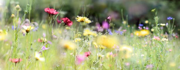 wildblumenwiese natur banne...