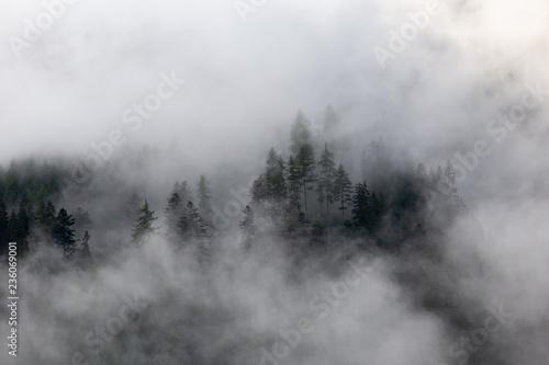 las-we-mgle-wiecznie-zielone-drzewa-w-chmurach-tajemniczy-krajobraz
