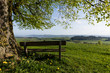 Old tree with a wooden bench stands on a hill on a wonderful spring day in central Switzerland near Ruswil