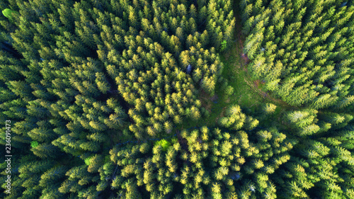 Wall Murals Forest Aerial view on the summer forest. Beautiful natural landscape from air. Green forest as a background from drone.