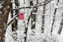 Bright Colorful Wooden Bird Feeder Close-up Covered With Snow, Winter Day In Park. Natural Winter Landscape, Copy Space