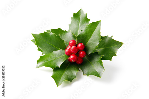 Holly leaves decoration with red berries. Fototapeta