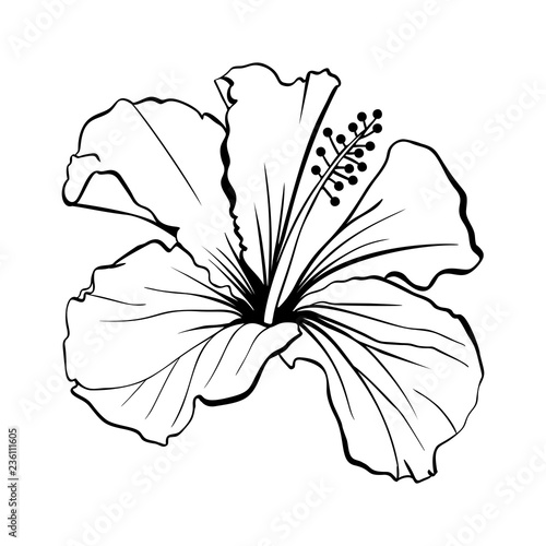 Hawaiian Hibiscus Laser Cut Vector Fragrance Outline Flower Mallow