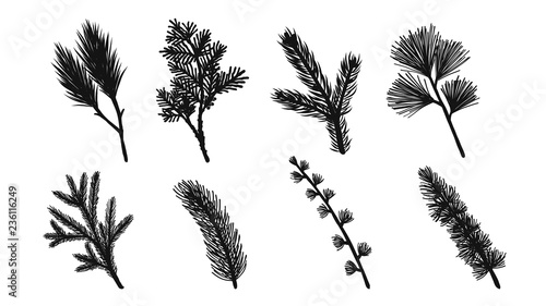 Set of pine leaf silhouette on white background Canvas-taulu
