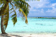 travel, seascape and nature concept - tropical beach with palm tree in french polynesia