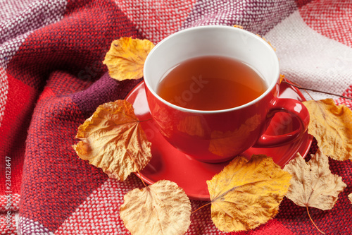 Cup of hot tea dressed in knitted warm winter scarf