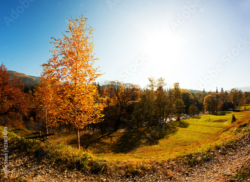 Foto op Canvas Herfst Autumn. Fall. Autumn panorama with trees and river