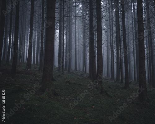 Foto auf Acrylglas Wald im Nebel Nebeliger Wald