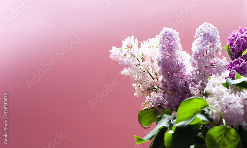 Beautiful bouquet of lilac on pink background with copy space