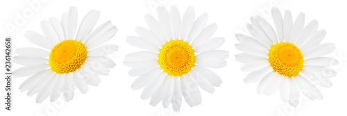 Foto op Canvas Madeliefjes Daisy flower isolated on white background as package design element