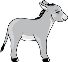 Funny Baby Donkey
