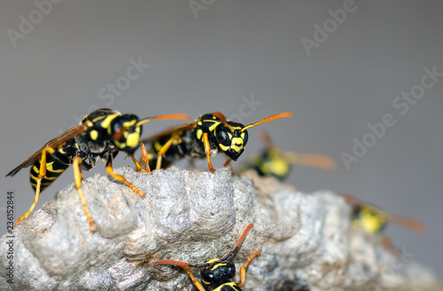 Wasps build a nest. Wasp family sitting on a nest
