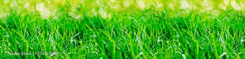 Fototapeta fondo y textura de cesped verde obraz