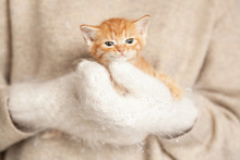 Woman In Warm Cosy Mittens Holding Cute Red Kitten