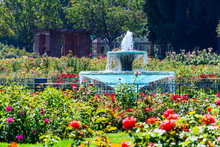 Water Fountain Surrounded By Beautiful Roses, The Municipal Rose Garden, San Jose, South San Francisco Bay Area, California