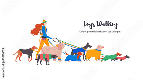 Vector illustration. Set icons of dogs in overalls and personal dog-walker. Different breeds: basset hound, komondor, rhodesian ridgeback, golden retriever, dobermann, weimaraner, dachshund.