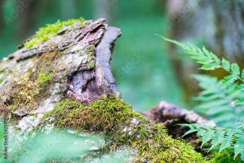 Fotografie, Obraz  green moss on a tree