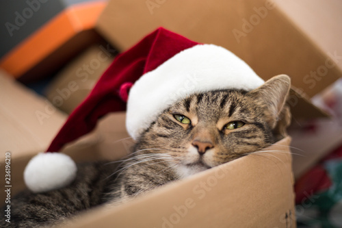 Canvas Print Christmas cat from the parcel