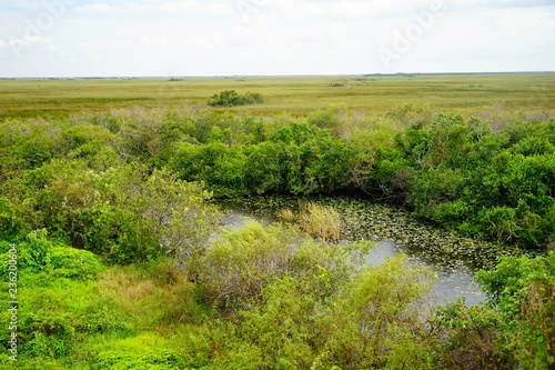 A canal in everglades national park