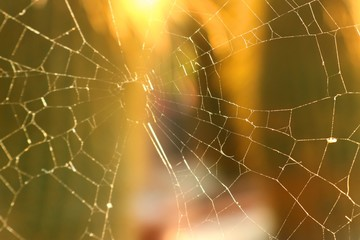 spider webs on cactus