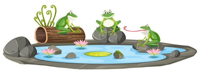 Odosobniona żaba w stawie