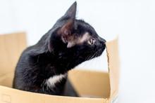 A Cat Plays In A Cardboard Box