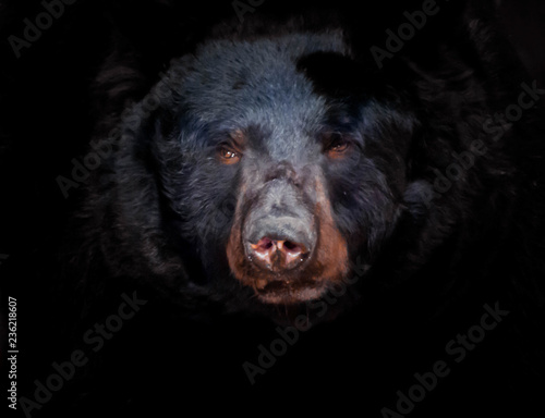 Photo Stands Panther portrait of a bear